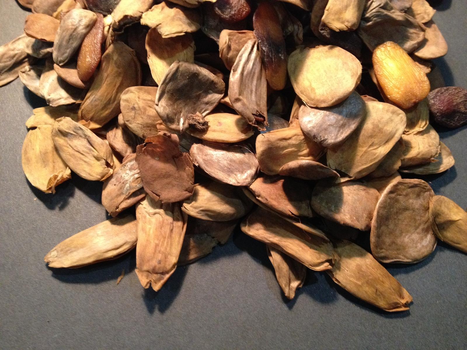 Akuamma Seeds Coffee Grinder